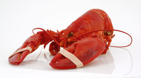 Banded lobster Stock Photos