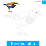 Banded pitta bird learn to draw vector. Banded pitta learn birds educational game learn to draw vector illustration Royalty Free Stock Photo