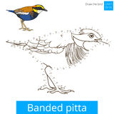 Banded pitta bird learn to draw vector. Banded pitta learn birds educational game learn to draw vector illustration Royalty Free Stock Images
