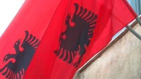 Bandeira albanesa Fotos de Stock Royalty Free