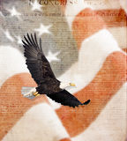 Bandeira americana, águia calva de voo, e constituição Fotografia de Stock Royalty Free