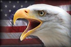 Bandeira americana e águia Foto de Stock