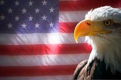 Bandeira americana e águia Fotografia de Stock Royalty Free