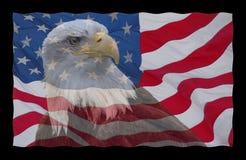 Bandeira americana e águia calva Fotos de Stock Royalty Free
