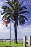 Bandeira americana e palmeira Foto de Stock Royalty Free