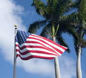 Bandeira americana, palmeiras Fotos de Stock Royalty Free