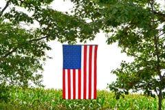 Bandeira americana sobre o campo de milho Fotografia de Stock Royalty Free