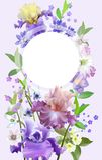 Bandeira botânica do vetor com íris e as flores azuis da mola Design floral para cosméticos naturais, pares e outras mulheres ilustração royalty free