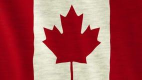 Bandeira canadense video estoque