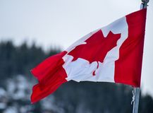 Bandeira canadense que renuncia no vento Imagens de Stock