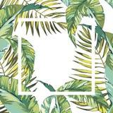 Bandeira, cartaz com folhas de palmeira, folha da selva Fundo tropical floral do verão do vetor bonito Eps 10 Fotos de Stock Royalty Free