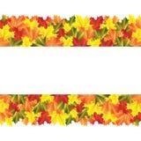 Bandeira com folhas de bordo do outono Fotos de Stock Royalty Free