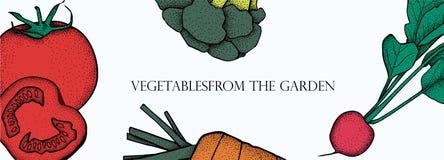 Bandeira com vegetais do vetor Alimento saudável do conceito Brócolis, cenoura, tomate, rabanete fotos de stock