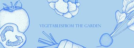 Bandeira com vegetais do vetor Alimento saudável do conceito Brócolis, cenoura, tomate, rabanete fotografia de stock royalty free