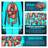 Bandeira da anatomia do corpo humano com órgão, esboço do osso ilustração stock