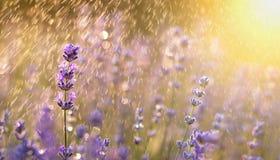 Bandeira da flor do verão Imagem de Stock Royalty Free