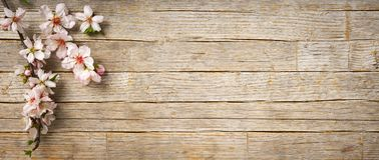 A bandeira da mola, amêndoa floresce flores no assoalho de madeira imagens de stock royalty free