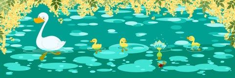 Bandeira da mola dos patos Fotografia de Stock