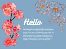 Bandeira da mola Flores cor-de-rosa de sakura, esboços das flores Olá!! No fundo há uma sala para seu texto ilustração do vetor