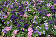 Bandeira das flores Background Imagens de Stock