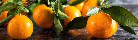 Bandeira de tangerinas alaranjadas com as folhas verdes no fundo escuro imagem de stock