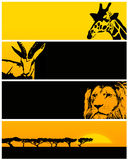 Bandeira do animal selvagem Foto de Stock