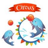 Bandeira do circo com golfinho inteligente Vetor ilustração do vetor