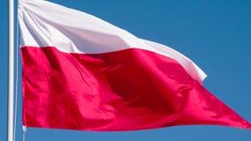 Bandeira do estado de Poland video estoque