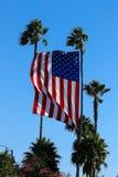 A bandeira do Estados Unidos voa com palmas imagens de stock