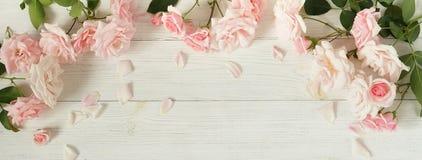 Bandeira do fundo das flores Ramalhete de rosas cor-de-rosa bonitas no fundo de madeira branco imagem de stock royalty free