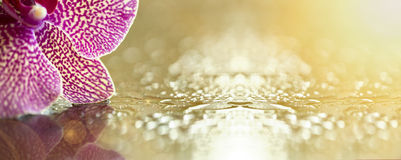 Bandeira do Web site da flor Fotos de Stock Royalty Free