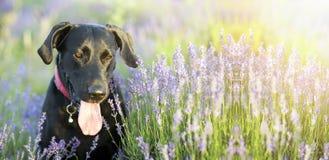 Bandeira feliz do cão foto de stock royalty free