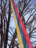 Bandeira lituana e árvore bonita Fotografia de Stock Royalty Free