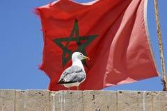 Bandeira marroquina Fotos de Stock