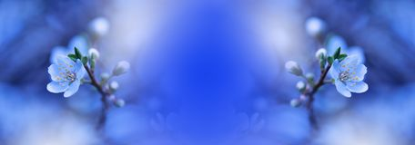 Bandeira ou encabeçamento do Web da flor da natureza da mola Foto macro abstrata Fundo azul artístico Projeto da fantasia Papel d foto de stock