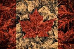 Bandeira real de Canadá da folha Imagens de Stock Royalty Free