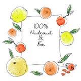 Bandeira retangular das citrinas do esboço da tinta e da aquarela no fundo branco Toranjas, laranjas alaranjadas, amarelas ilustração do vetor