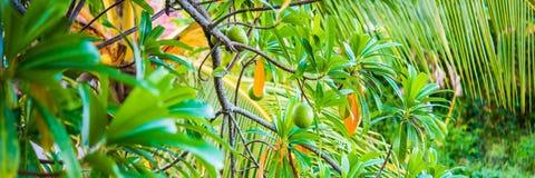 Bandeira verde tropical Imagem de Stock