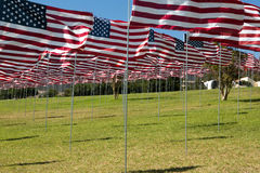 Bandeiras americanas Foto de Stock