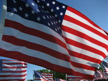 Bandeiras americanas Fotografia de Stock Royalty Free