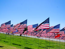 Bandeiras americanas em um campo Foto de Stock Royalty Free