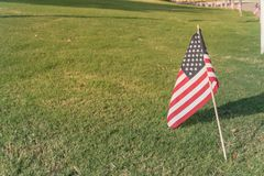 Bandeiras americanas no Dia da Independência do gramado da grama verde Fotos de Stock