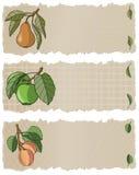 Bandeiras APP da fruta Fotografia de Stock
