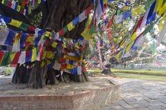 Bandeiras budistas coloridas da oração na árvore em Lumbini, Nepal Fotografia de Stock