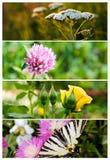Bandeiras da natureza da colagem Imagem de Stock Royalty Free