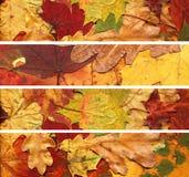 Bandeiras das folhas de outono Imagem de Stock