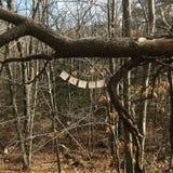 Bandeiras das orações nas madeiras Fotos de Stock Royalty Free