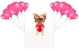 Bandeiras do feriado com balões e cão Imagens de Stock Royalty Free