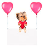 Bandeiras do feriado com balões e cão Foto de Stock