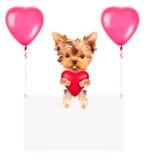 Bandeiras do feriado com balões e cão Fotografia de Stock Royalty Free